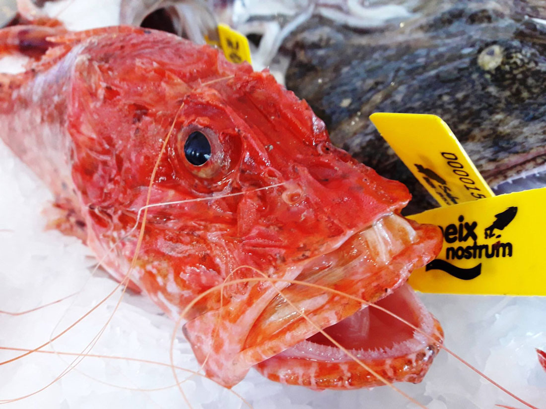 pescado peix nostrum